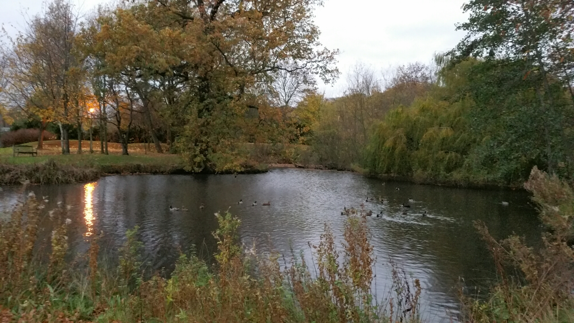 Image result for cooky's pond bramcote